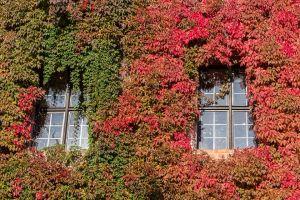 2014-09-29-Europe-Heap-0050.jpg