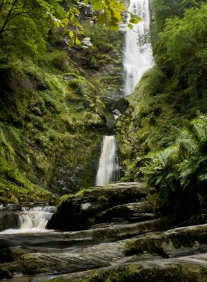 Steve Heap - Vertical Waterfall with leaves.jpg
